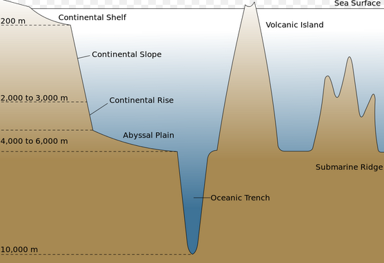 ocean drop diagram wiring diagram blogs continental shelf ocean drop diagram wiring diagrams ocean zones diagrams exploring the ocean marybelle's marine science site abyssal